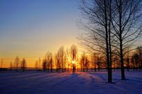 雪原树林夕照