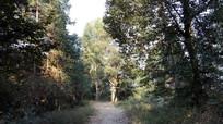 原始森林里的小路