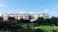 蓝天下的房屋与菜园