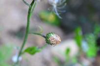 小小的花苞
