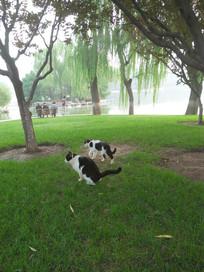 草丛中的两只小猫