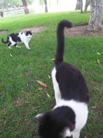 草丛中漫步悠闲的两只小猫咪