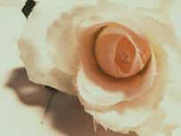 淡粉色玫瑰花植物摆件