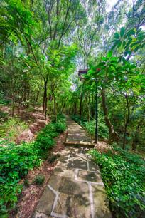 惠州飞鹅岭的山间小路
