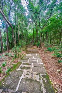 惠州飞鹅岭的山路台阶