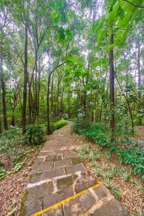 惠州飞鹅岭下坡的山路
