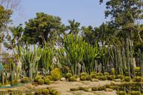 热带仙人掌植物园