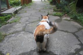 摇摇尾巴猫咪