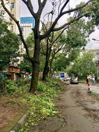 珠海台风过后的路面情况