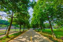 惠州学院校园小路