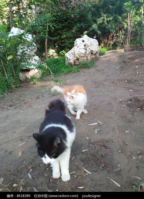 两只可爱的小猫咪图片