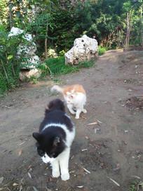 两只可爱的小猫咪