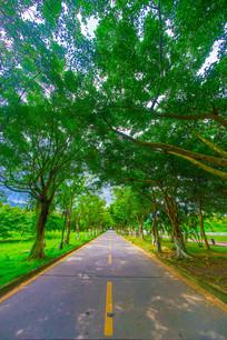 大学里的绿荫小路