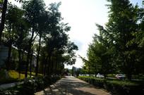 街边整齐的树木