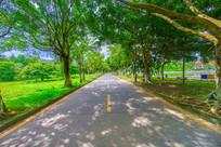 美丽的绿荫小路