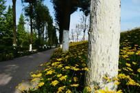 刷灰的树木和盛开的黄色菊花