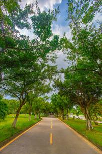 校园的绿色小路