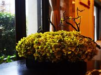 细叶植物装饰效果