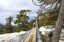 原始森林索道积雪