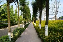 整齐的树木和开满鲜花的路边