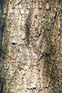 不规则树皮纹