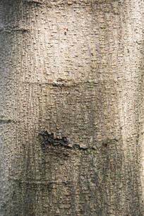 点状树皮纹