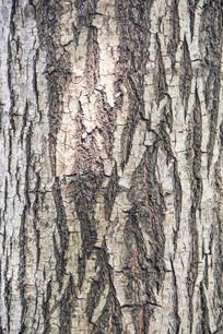 精细树皮纹