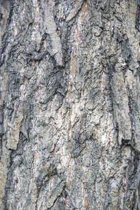 老树皮花纹