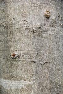 树皮自然花纹