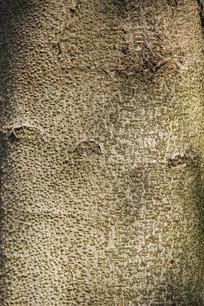 树皮自然纹