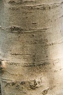 树皮自然纹理