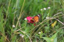 微距摄影蝴蝶与小花
