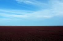 八月的红色海洋