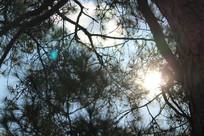 大树里透露出阳光