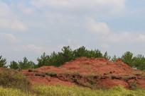 红沙林天空