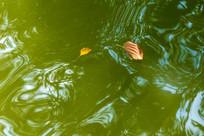 湖水上的落叶