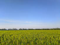 廊下生态稻田