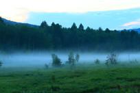 绿色树林 夜雾升腾