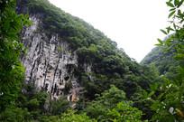 绿树与山崖
