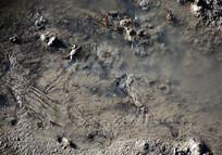 泥塘中的小河蟹