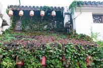 爬满藤蔓的屋顶