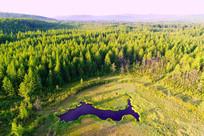 森林湿地湖泊风景 (航拍)