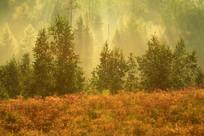 森林雾气迷漫