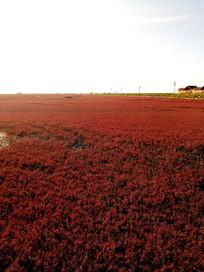 夕阳下的红海滩