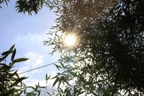 竹叶里透露出太阳