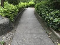 公园林间落叶小路小道