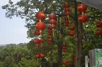 挂在树上的大红灯笼