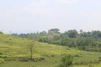 绿色农村景观