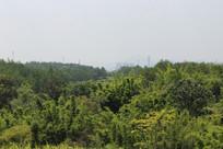 绿色森林农村