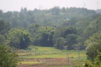 绿色山村景观